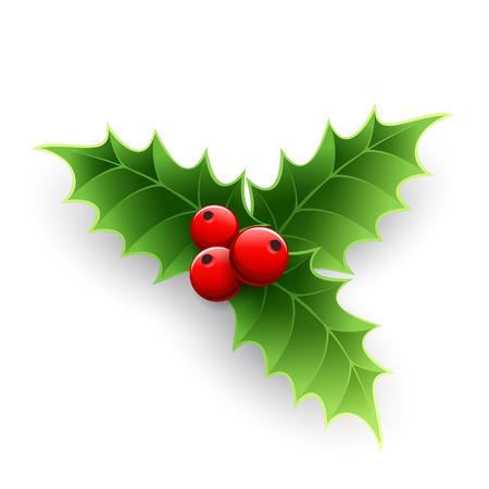 クリスマス ヒイラギの果実は白で隔離。ベクトル図