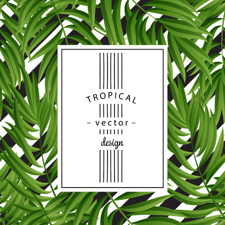 tropics: Tropical Palm leaves. Tropic palm. Tropical Palm leaf. Green tropic palm. Green palm summer tropical leaves. Tropic leaves frame. Green summer tropic palm leaves. Square frame. Illustration