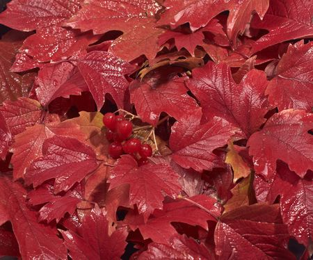 red autumn leaves, turn of the year, change season