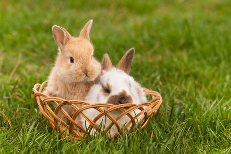 Newborn rabbits in springtime