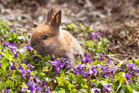 Little bunny in spring violets Stock Photo