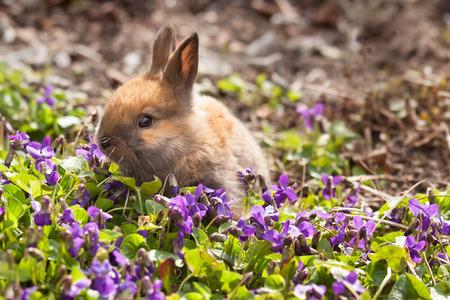 furskin: Little bunny in spring violets Stock Photo