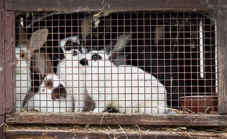the hutch: Rabbit family in a small hutch