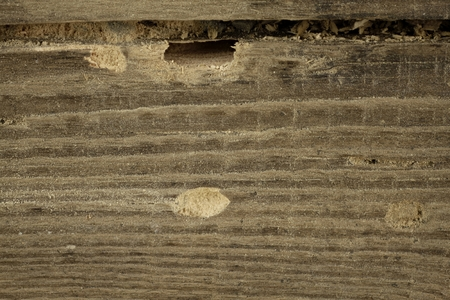 Exit holes of the domestic bug and damage to a wooden beam