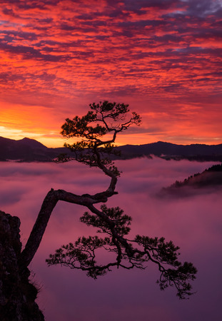 Kinga lonely tree in Pieniny mountains in sunrise light with the fog in background, Poland Stockfoto
