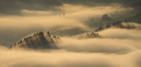 Trees in Fog in Pieniny mountains in sunrise light, Poland