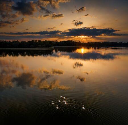 Flock of swans on lake on polish kayak route Krutynia, Poland