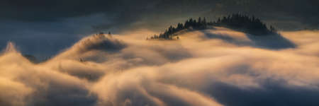 Panorama of trees in fog at Pieniny mountains in sunrise light, Poland
