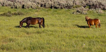Ein schönes Bild von zwei Pferden. Standard-Bild - 9896056