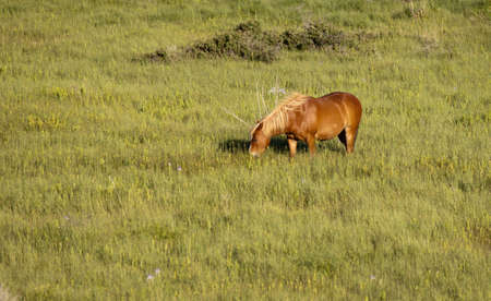A horse is feeding on the naturaul countryside. Standard-Bild - 9896062
