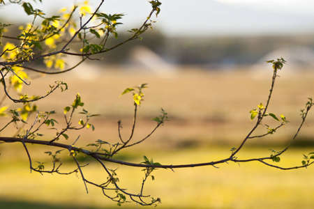 A nice abstract of a tree branch. Standard-Bild - 9896034