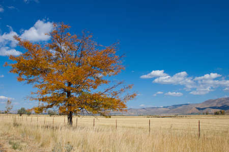 Image of a tree in the fall.