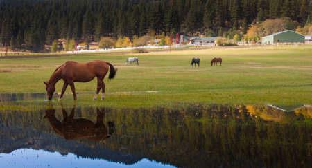 Image of a horse drinking water.