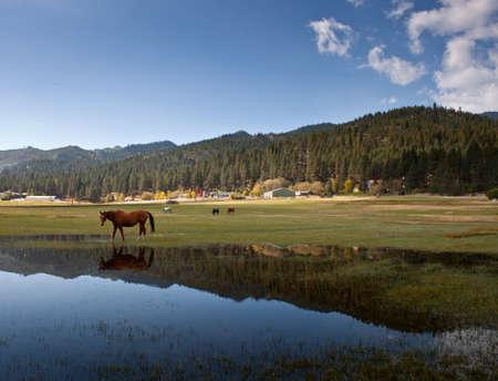 Bild von Ackerland und einem Pferd. Standard-Bild - 11006694