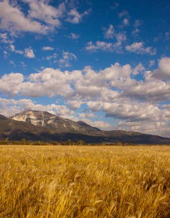 Image of Slide Mountain Nevada.