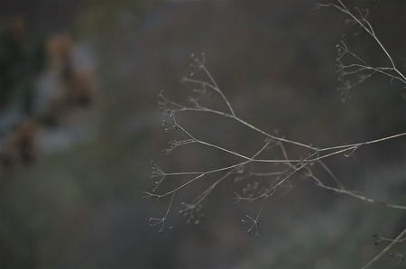 Twig during the dusk 스톡 콘텐츠