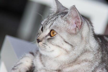 vacant: vacant cat4