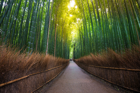 japanese background: Beautiful bamboo forest and walk way in Kyoto, Japan. Stock Photo