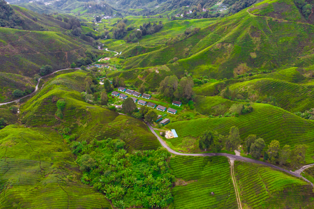 Drone view of Tea plantation in Cameron highlands, Malaysia