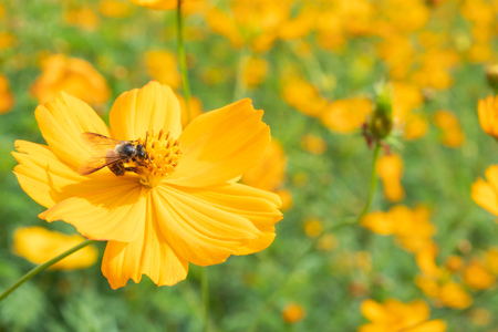 Spring single daisy flower and bee Imagens