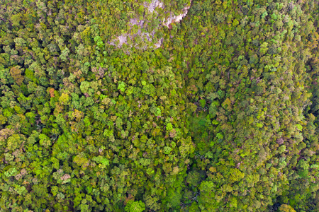 Drone view of green rain forest in Asia Imagens