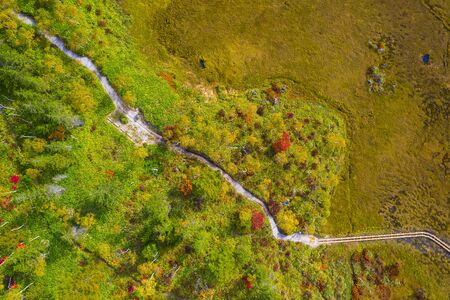 Aerial view of autumn forest in mountain Фото со стока