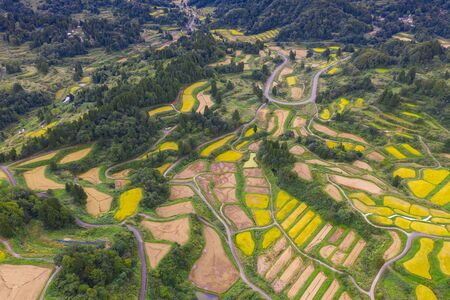 Aerial view of golden terrace rice field in Hoshitoge, Niigata, Japan Фото со стока