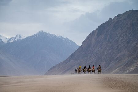 Camel safari at Hundar sand dunes in Nubra Valley, Leh, Ladakh, India