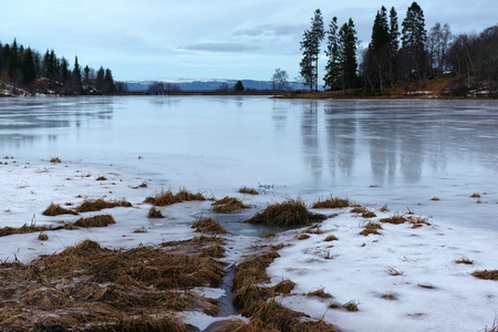 ice covered: Frozen pond and ice covered dried grass