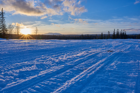 ski traces: Snowmobile tracks going into the forest at sunset. Stock Photo