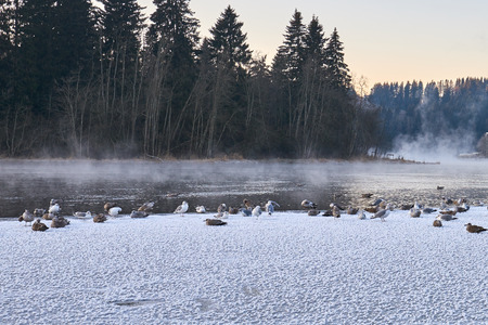 ice sheet: A flock of birds on ice sheet in subzero temperature. Frost smoke in background.