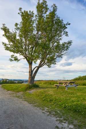 tall tree: Wooden bench under a tall tree. Stock Photo