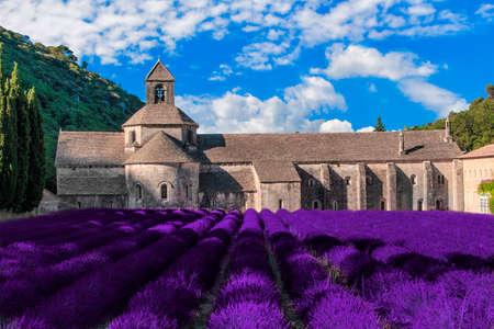 The lavender fields of Senanque Abbey near Gordes, France