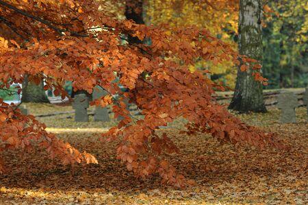 Herbst Stock Photo - 5817534