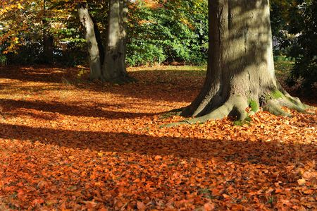 Herbst Stock Photo - 5817535