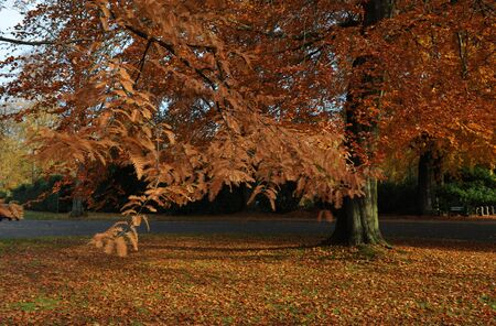 Herbst Stock Photo - 5817533
