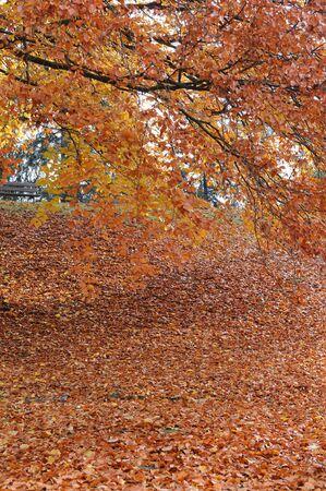 Herbst Stock Photo - 5817538