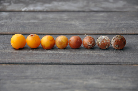 Ripe yellow plums varying degrees of rot on a wooden brown background.