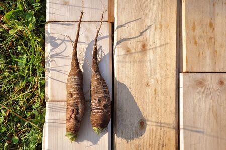 dikon: Two fruit of ripe radish, laid on a wooden board. Foto de archivo