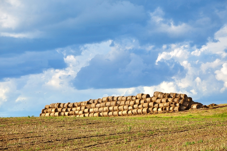 haymow: Agricultural field with a pile of haystacks on a background of blue sky with clouds.