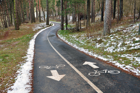 Two-way asphalt bike path in the winter pine forest in perspective.