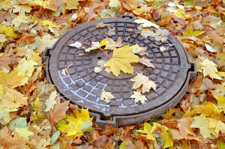 Old manhole cover and yellow maple leaves around in the autumn.