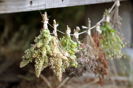 Dried herbs bound in bundles and hung on the rope. Close up, selective focus.