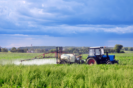 Green agricultural field in Belarus with a beet and a tractor watering and spraying fertilizer on a background of blue sky.
