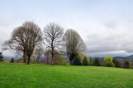 Bare trees on the horizon against the Vosges mountains in France in the spring in cloudy weather. Stock Photo