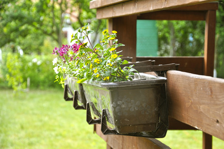 Flowers growing outside in a pot on a background of garden.