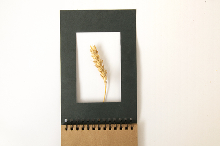 Ear of wheat in a black paper frame of notepad close up on white background.