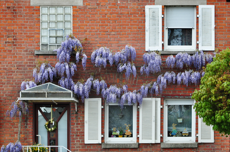 Burgstall (Murr), Baden-Wurttemberg, Germany - April 19, 2017: Red brick building with white windows and wisteria plants on the facade. Editorial