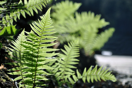 Green fern twigs in the backlit of the sunset. Close up, selective focus.