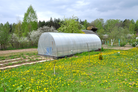 Agricultural semicircular greenhouse with plants in the garden.